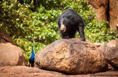 sanctuaries in Karnataka, Daroji Bear Sanctuary