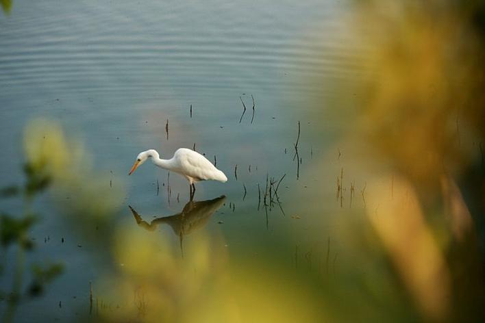 Kaikondrahalli Lake, Lakes in Bangalore