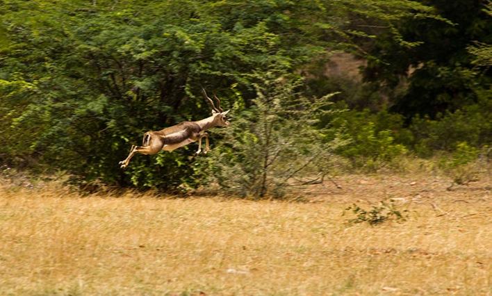 Jayamangali Blackbuck Reserve, Madhugiri