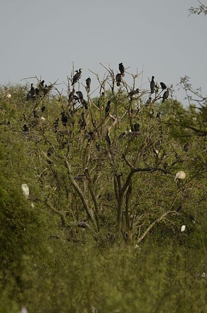 Gudavi Bird Sanctuary, Shimoga bird sanctuary