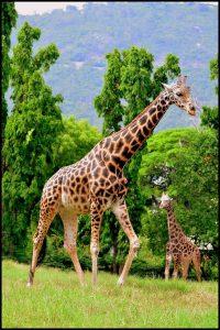 hri Chamarajendra Zoological Gardens , Mysore Zoo