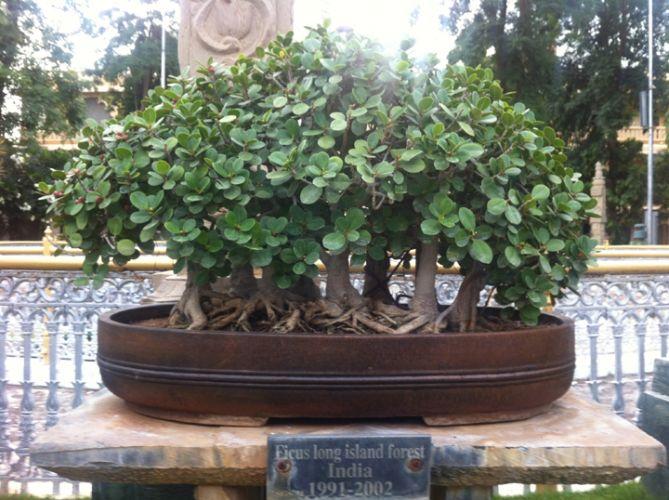 Kishkinda moolika bonsai garden, Mysore
