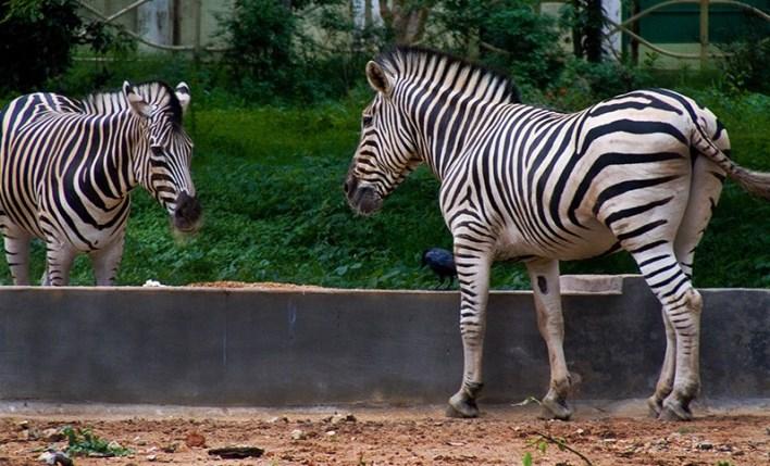Mysore Zoo, Mysore, Mysore Sightseeing